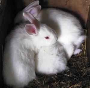 _DSC0113baby rabbitsSM